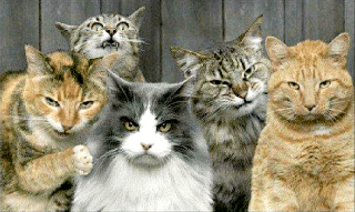 Cats looking mean as fuck